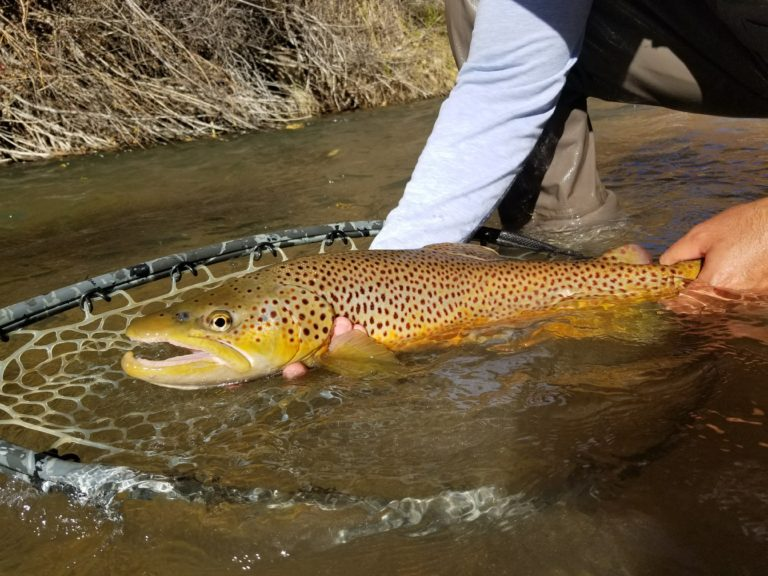 Utah Fly Fishing guides, park city fly fishing, Park city fly fishing guide service
